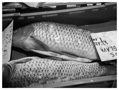 ph_daniela-pick-tamaro_2013-pesce.jpg
