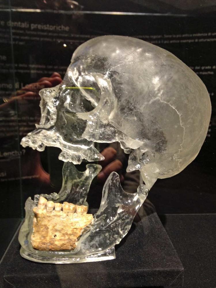 in preda alla scienza | museo civico di storia naturale