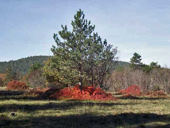 I colori del carso_ tra gli alberi