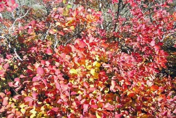 i colori del carso | cromoterapia della natura