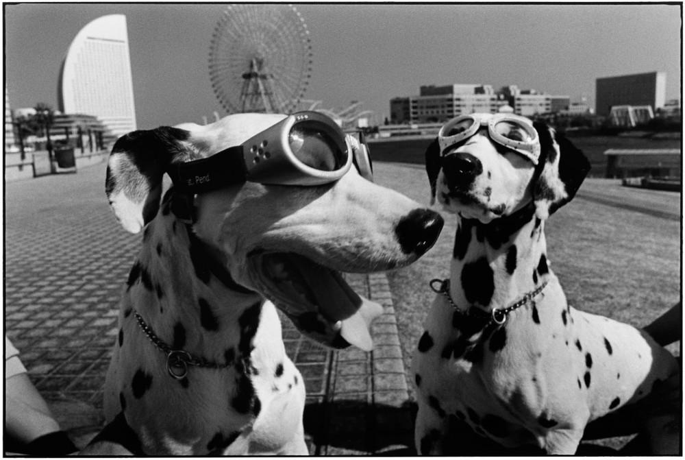 vita da cani | a Monaco